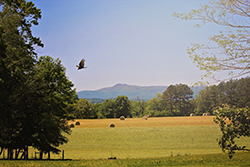 Photo of a field with hay in it. Mountain in the background and a bird flying through the frame.