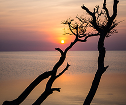 Silhouette of tree branches in front of water and sunset.