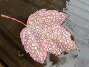 leaf covered in rain drops