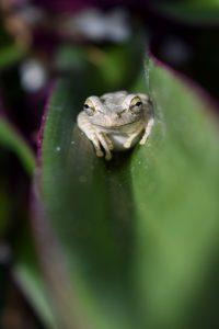 frog on greenery