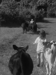 child walking with cattle